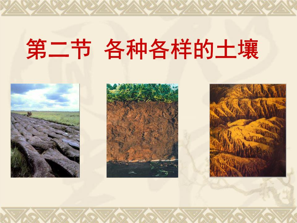 水稻生长过程图解ppt