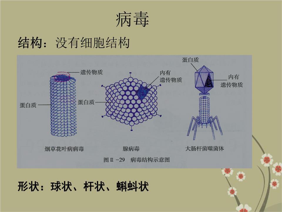 青霉和曲霉的结构图
