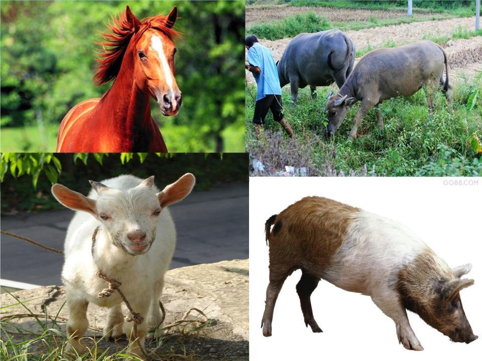 动物小结一,家兔外部形态结构特点体表被毛身体分为头,颈,躯干,四肢