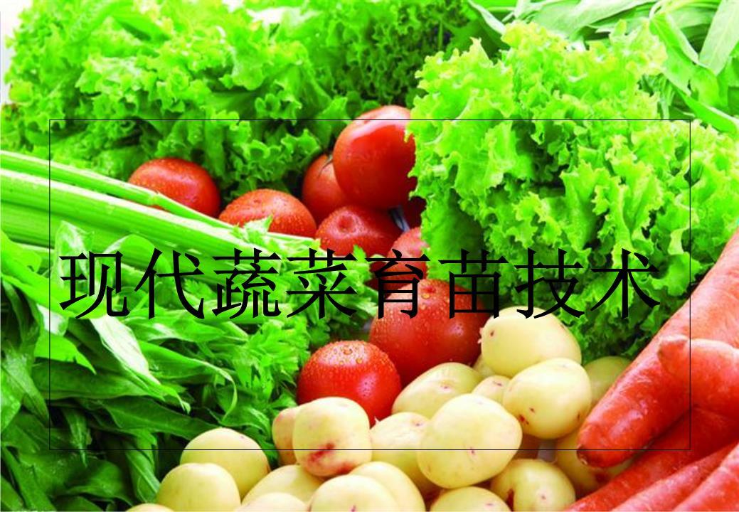 轻泥土手工制作图片水果蔬菜