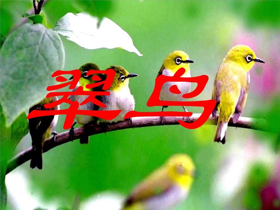 写动物叫声的词语_比较句子,体会用词的准确,生动.翠鸟叫声清脆,爱贴着水面飞.