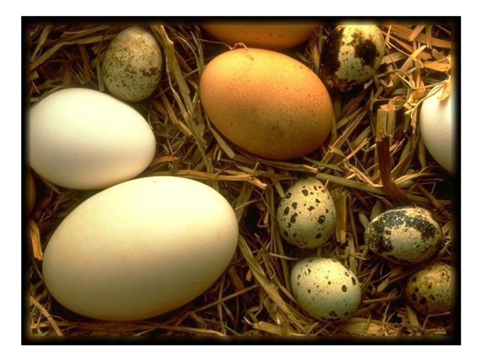你知道哪些动物是卵生的吗?