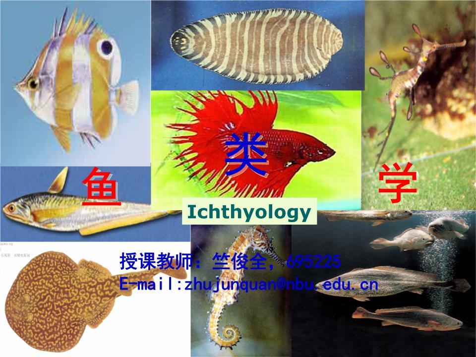各海区:《黄渤海鱼类调查报告》《南海鱼类志》,《南海诸岛海域鱼类志